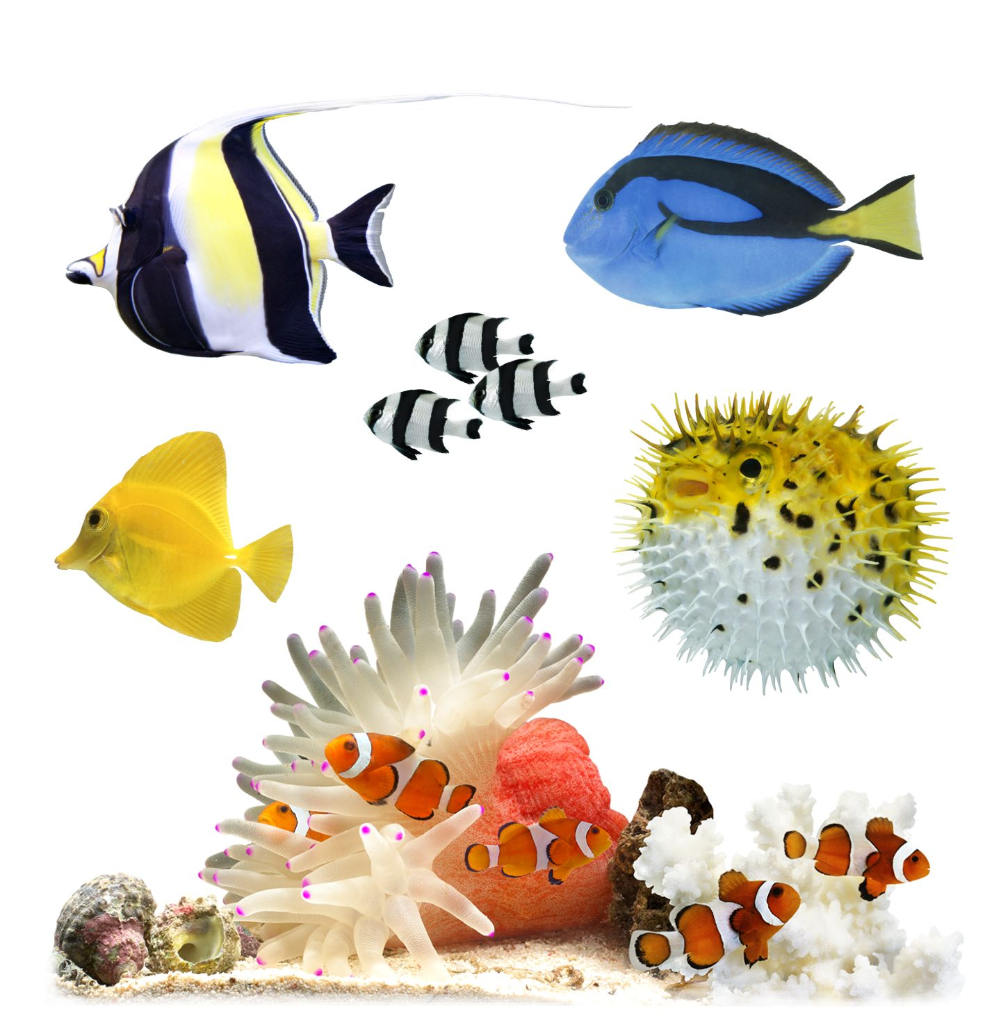 Ten facts about coral reef fish dk find out for Where to buy saltwater fish