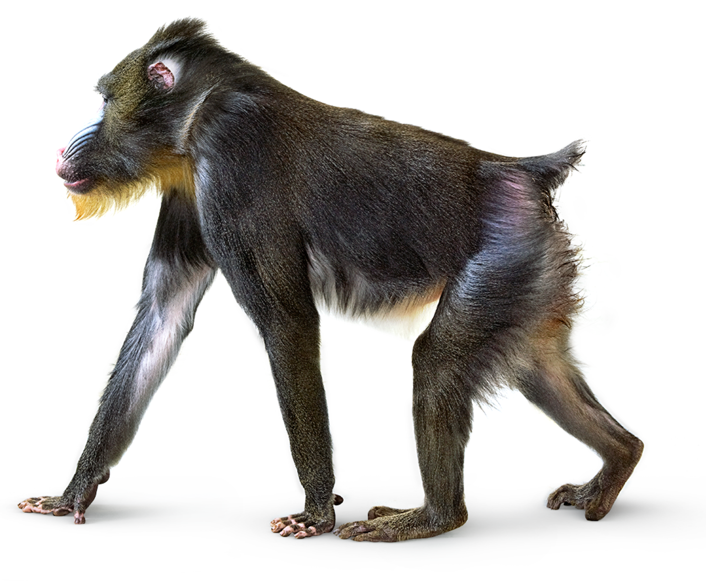 Monkey Facts Information About Monkeys Dk Find Out