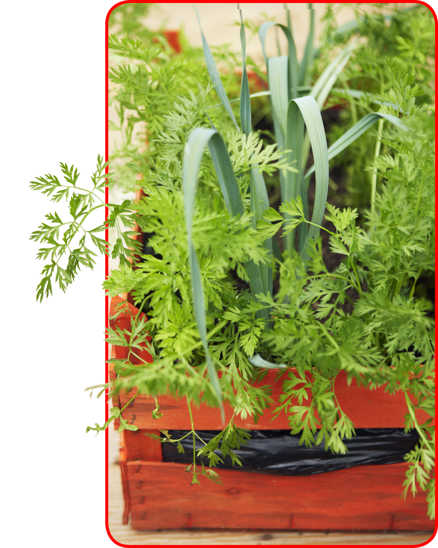 Awesome Grow Your Own Vegetables