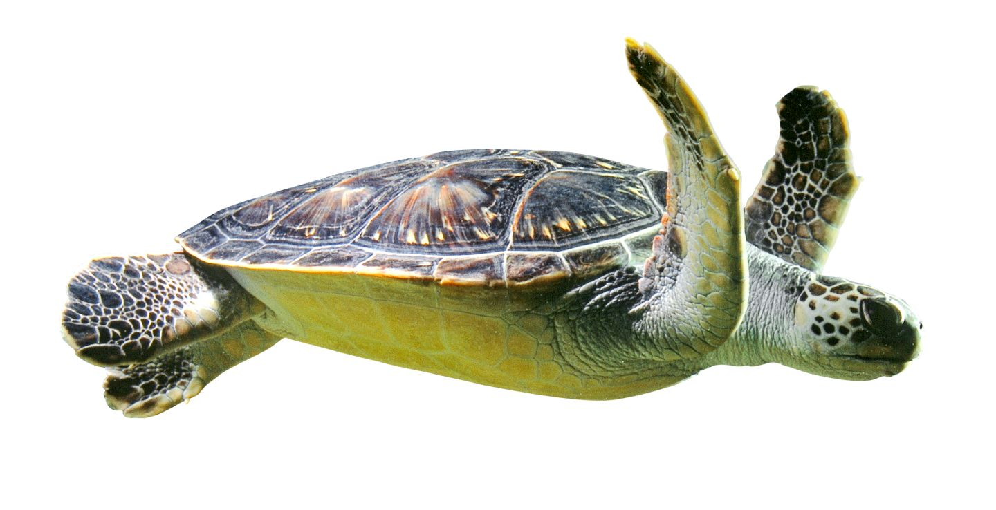 World Turtle Day: Five fun facts about turtles | DK Find Out!