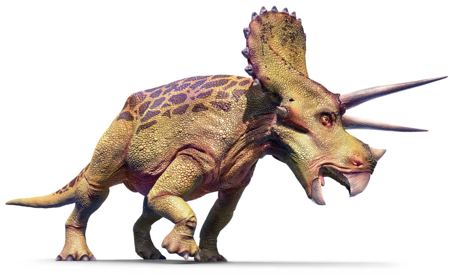 triceratops triceratops facts dk find out