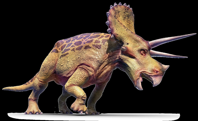 triceratops left cepidt