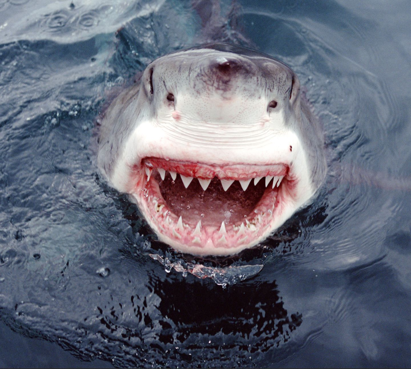 Shark Mouth Picture 62