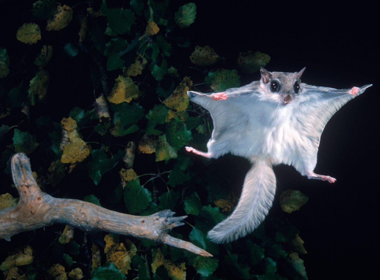 Flying Squirrel Food Menu