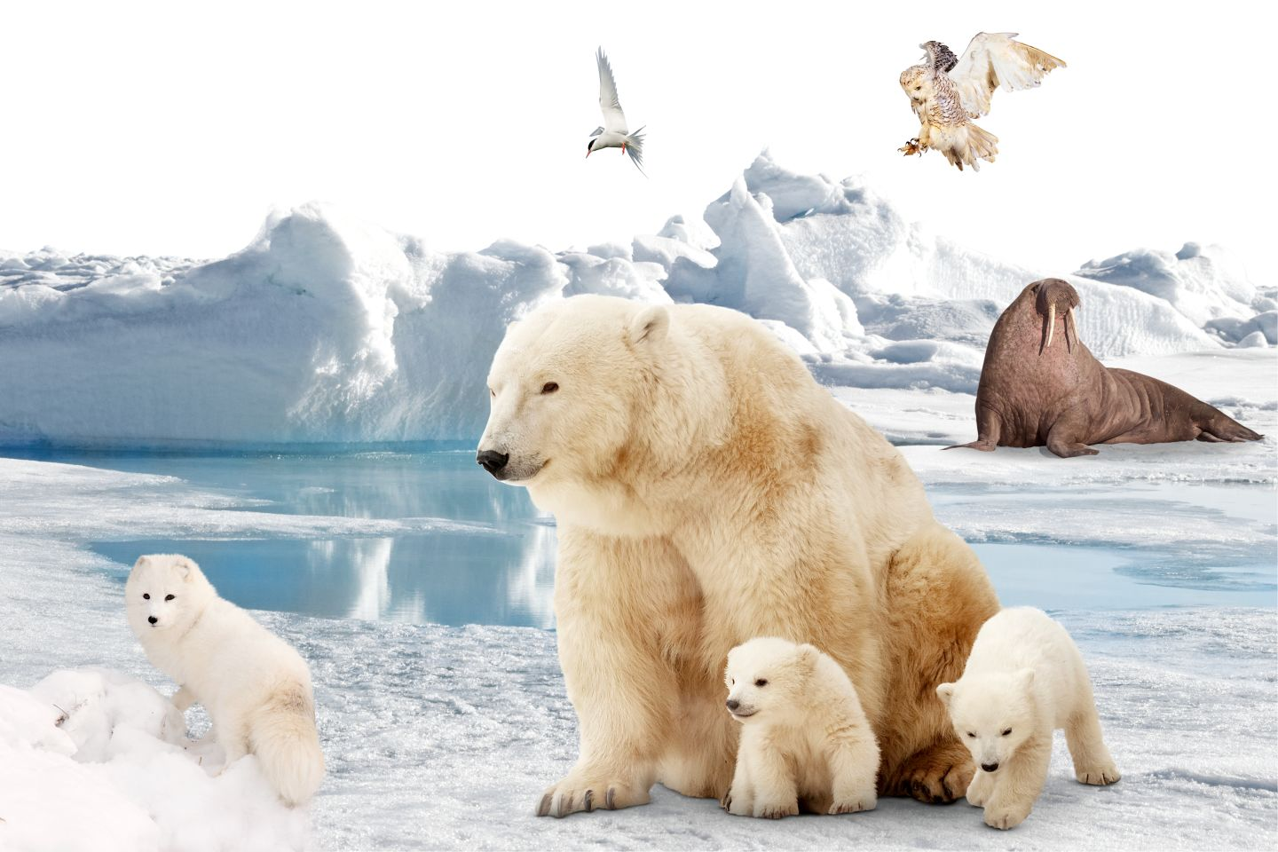 Facts About The Arctic | Animals In The Arctic | DK Find Out