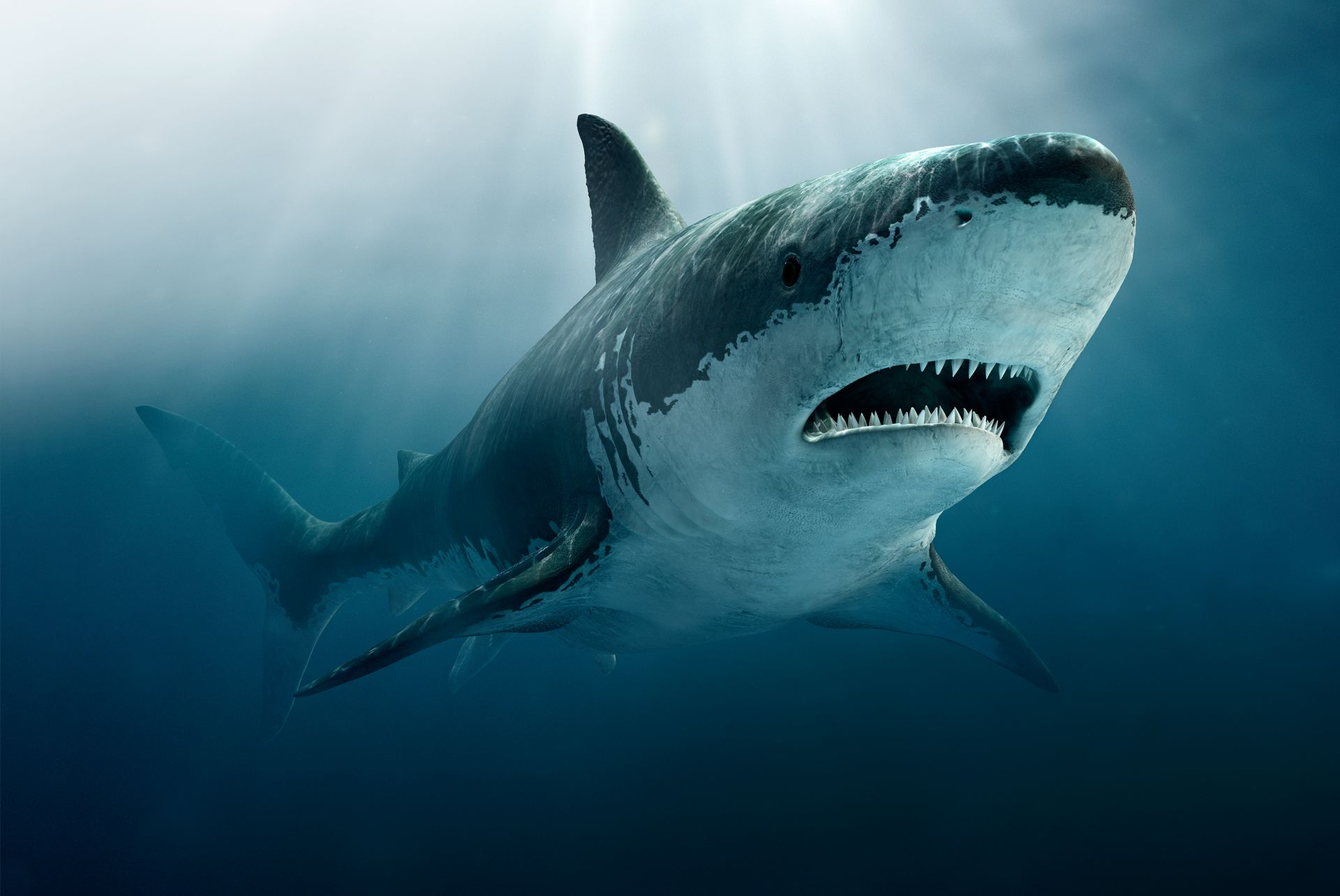 Great White Shark Size | Megatooth Shark Facts Megatooth Shark Size Dk Find Out