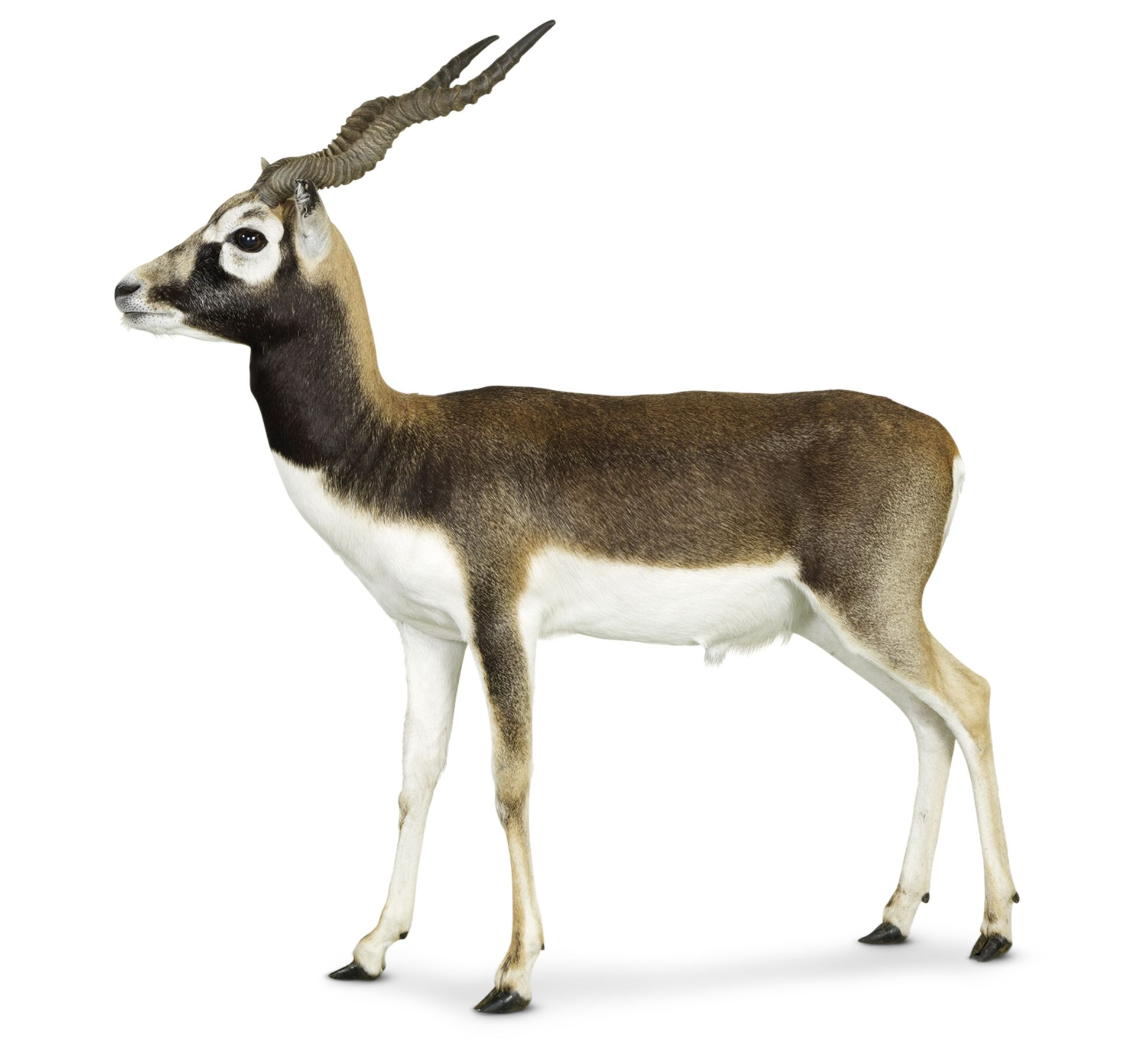Hoofed Mammals Facts | What Are Hooves | DK Find Out