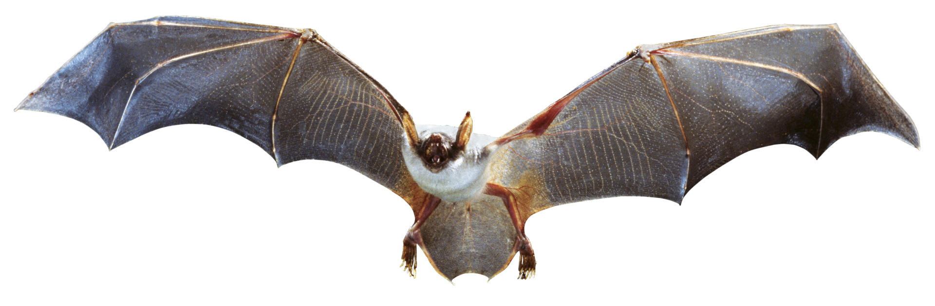 facts about bats bats information for kids dk find out