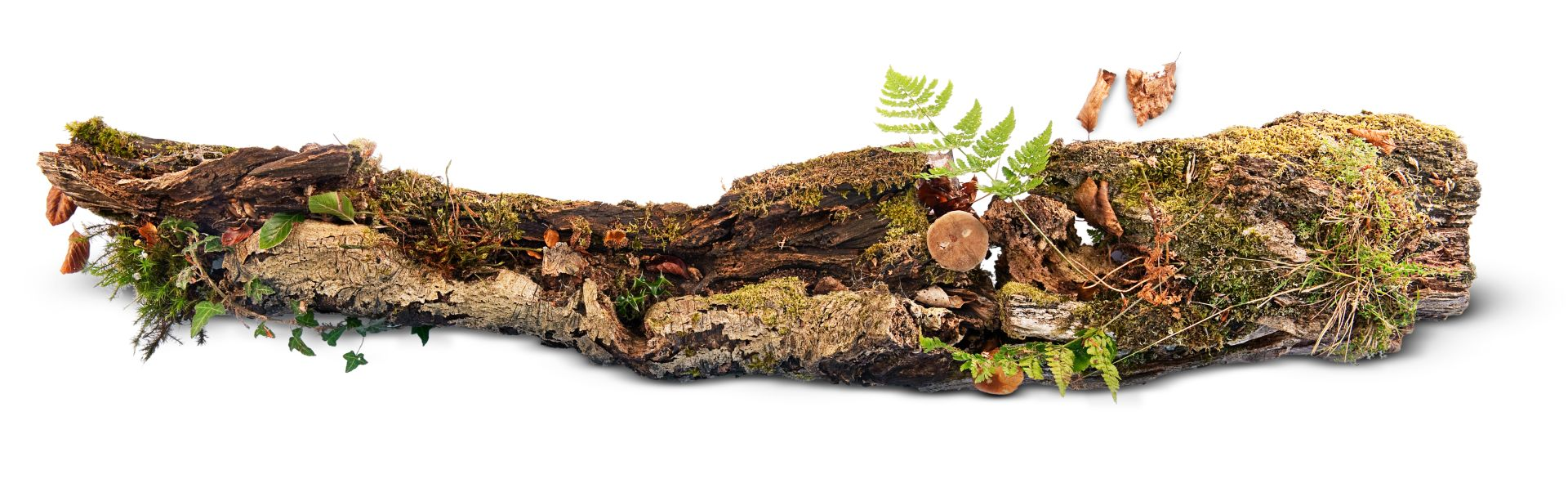 rotting log rotting log wildlife dk find out