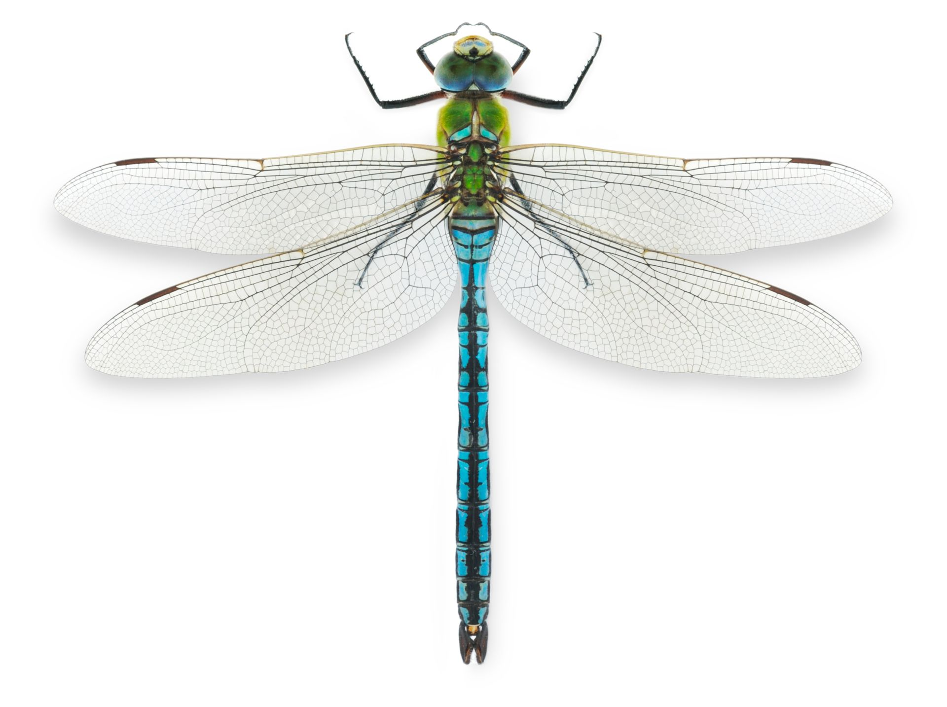 What Do Dragonflies Symbolize?