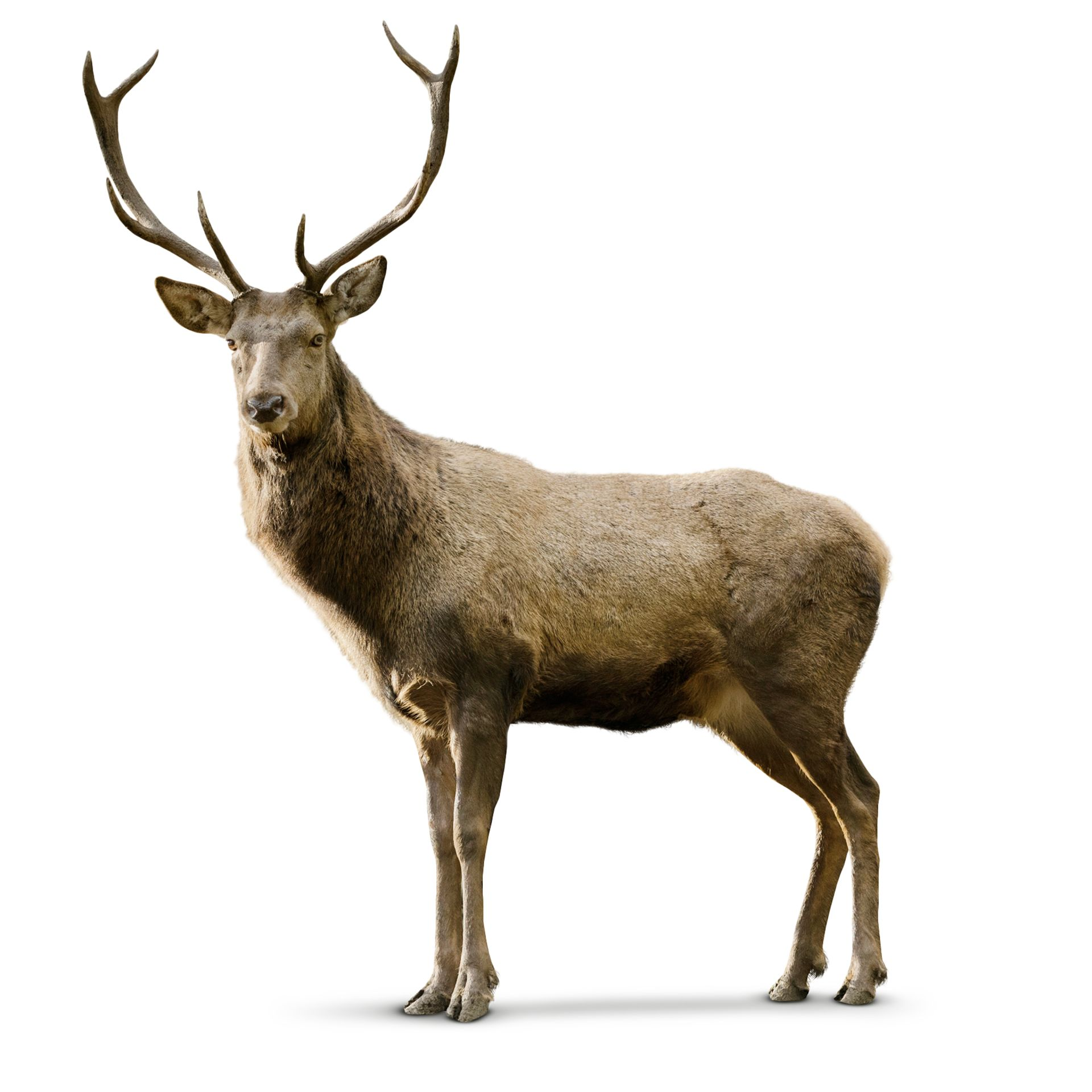 deer facts for kids what is a deer dk find out