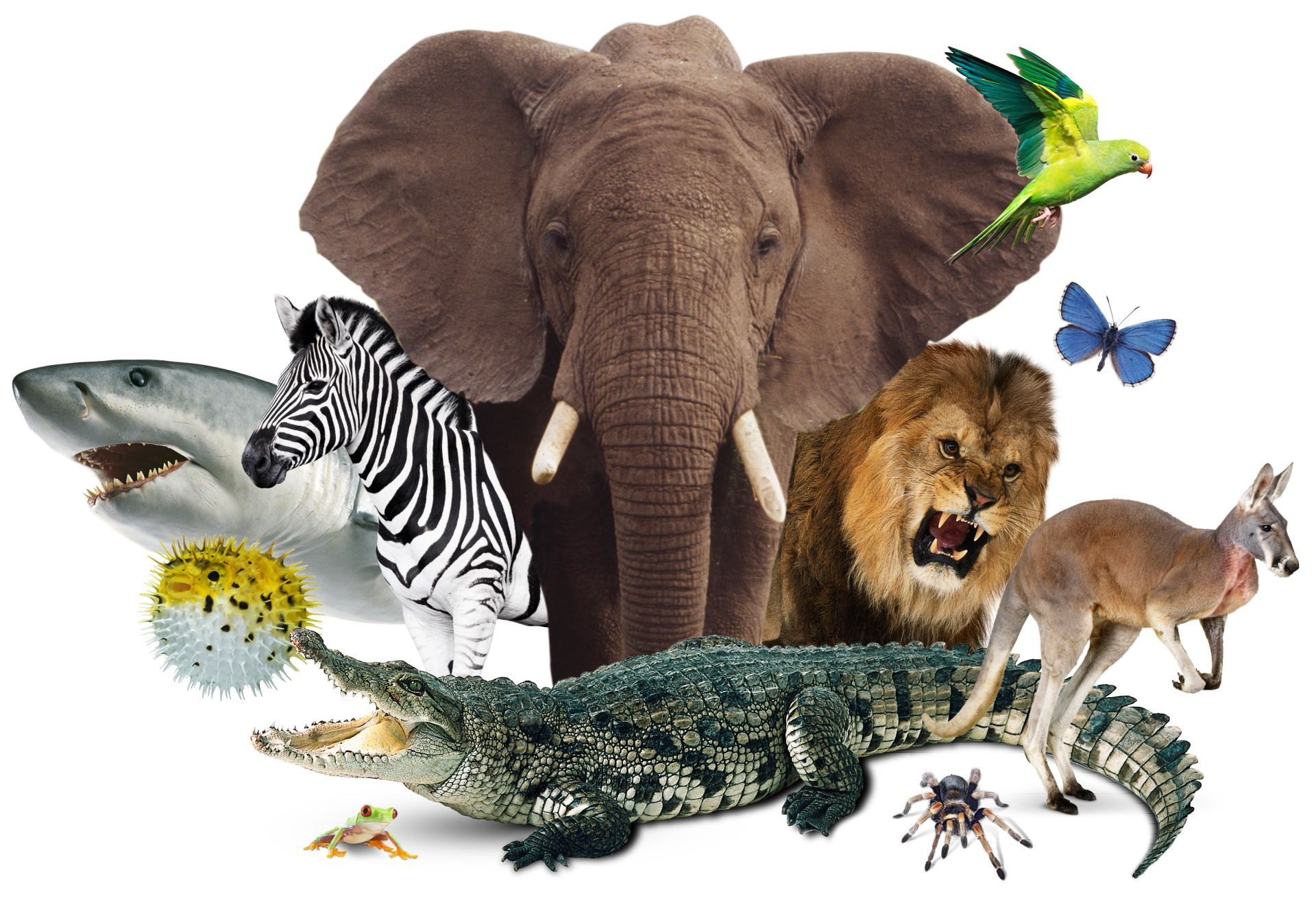 The Animal World | The Animal Kingdom | DK Find Out