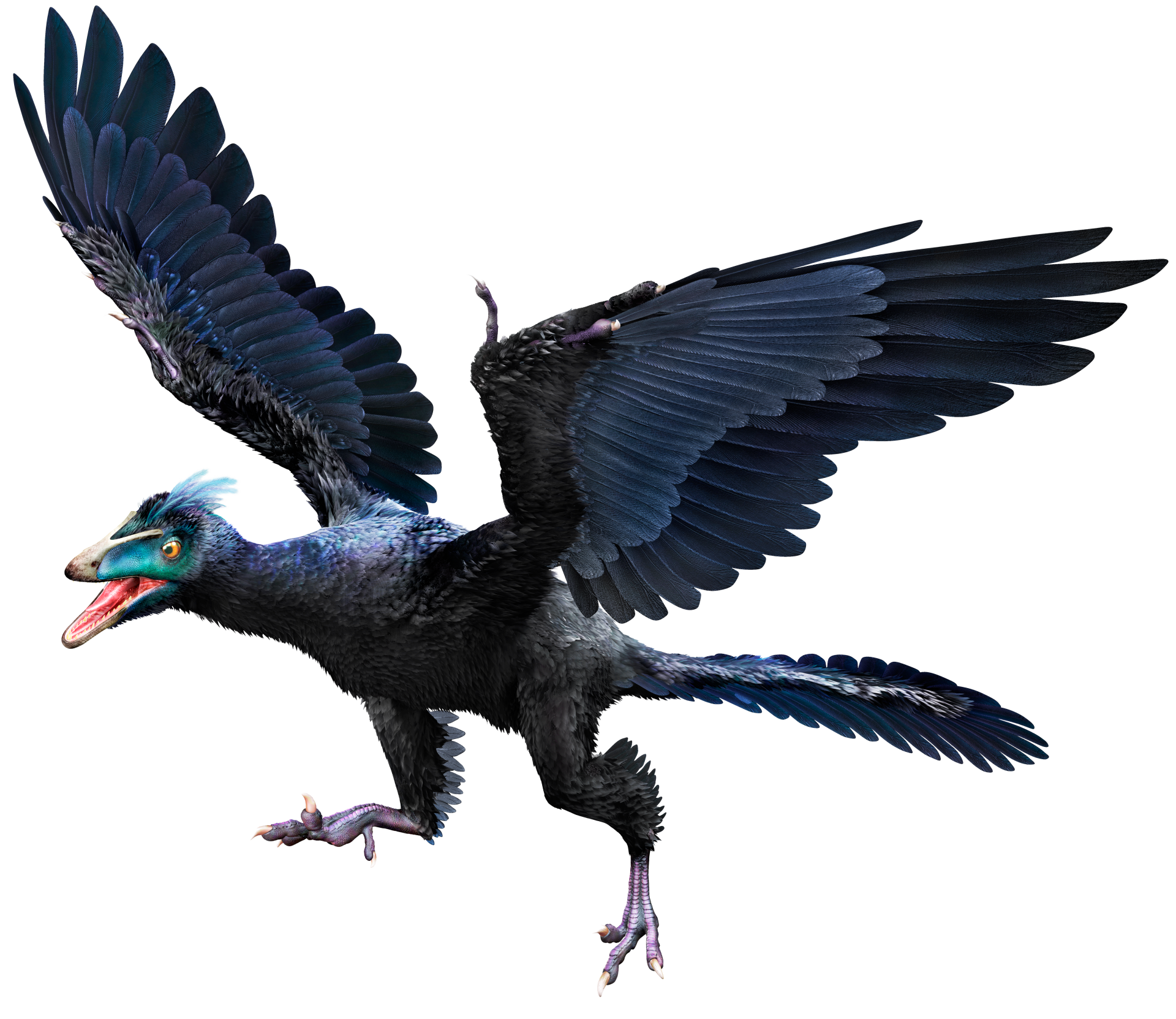 Archaeopteryx | Archaeopteryx Facts | DK Find Out Archaeopteryx Not A Transitional Form
