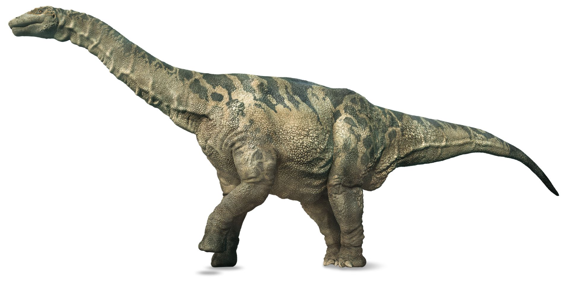 https://res.cloudinary.com/dk-find-out/image/upload/q_80,w_1920,f_auto/Argentinosaurus_HiRes_zrnqrq.jpg