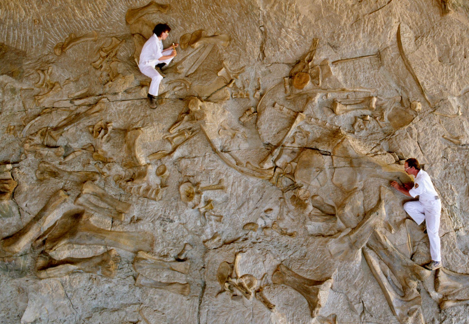 Dig This Dinosaur Fossils Unit Study - Brain Power Boy