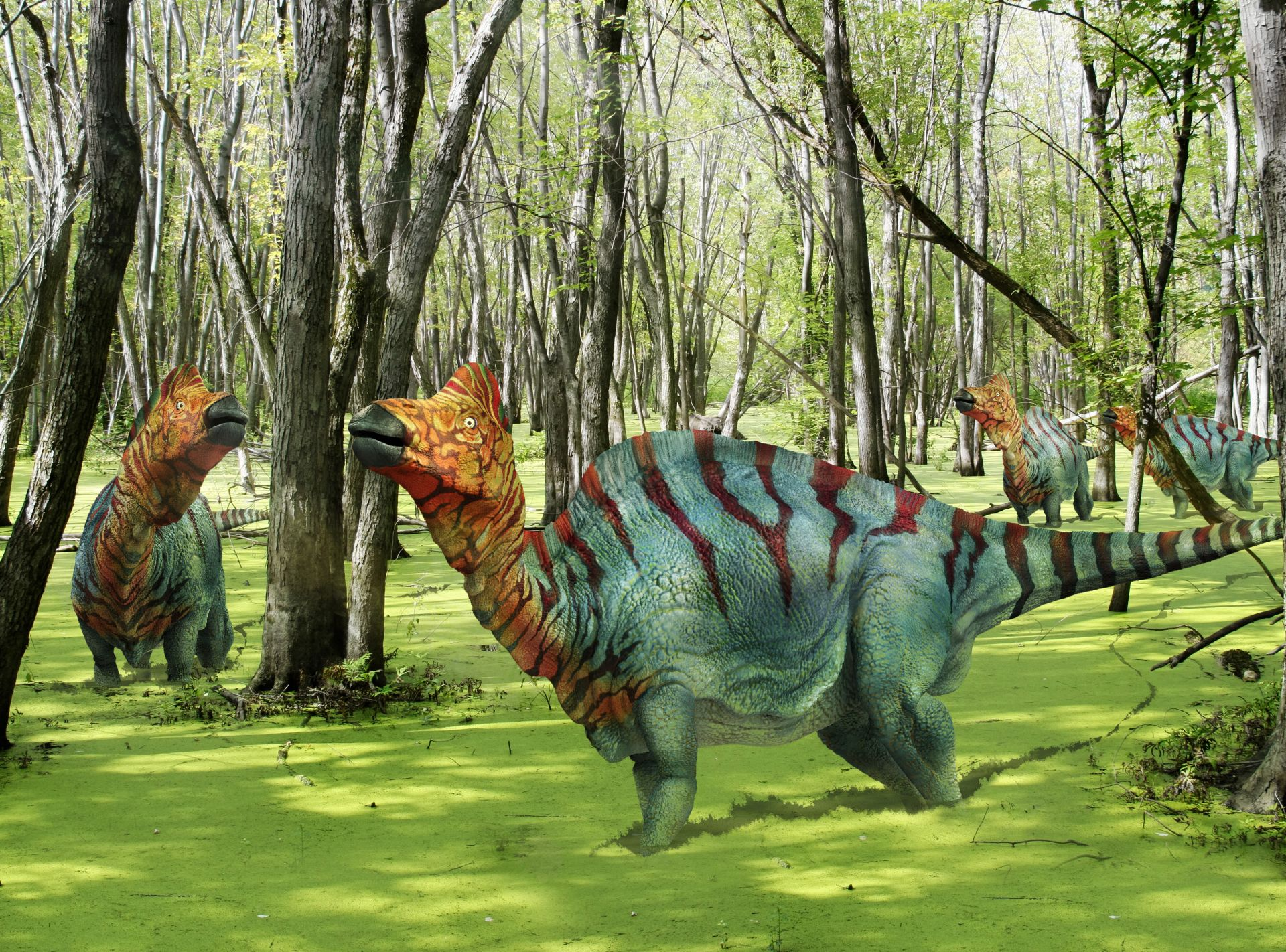 Corythosaurus Corythosaurus Facts DK Find Out