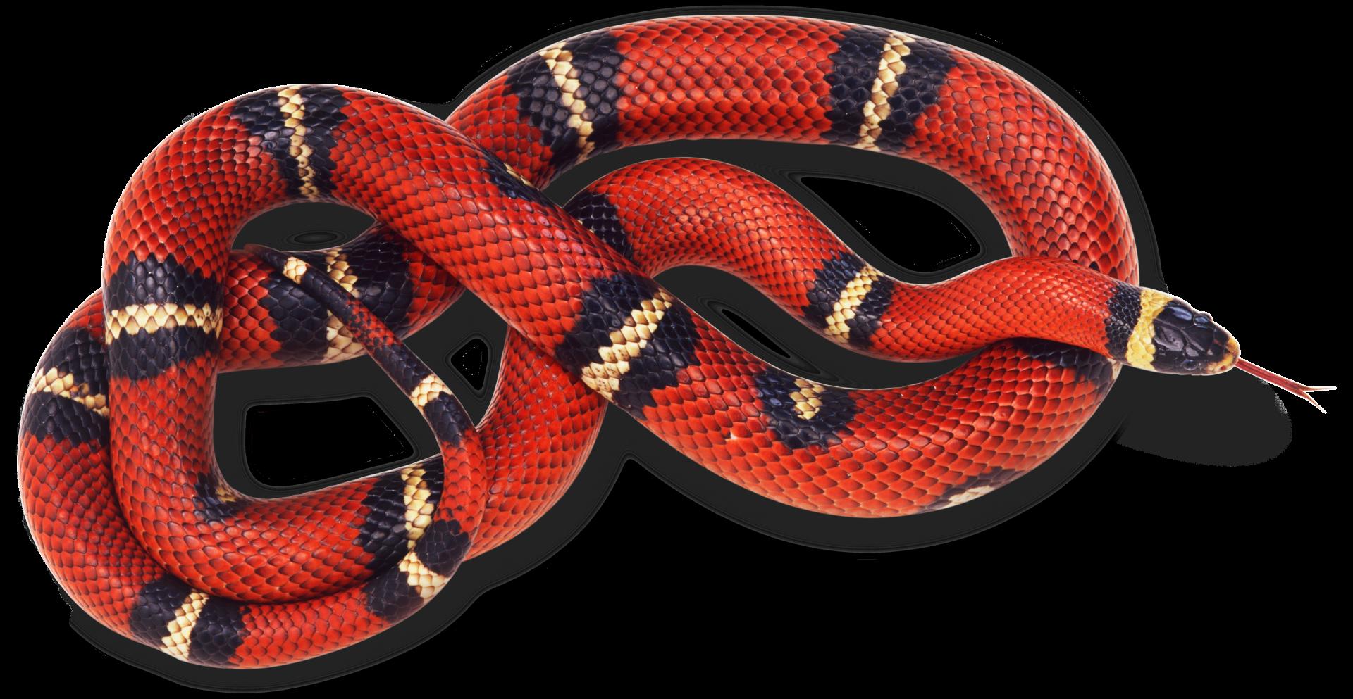 snake - 1440×745