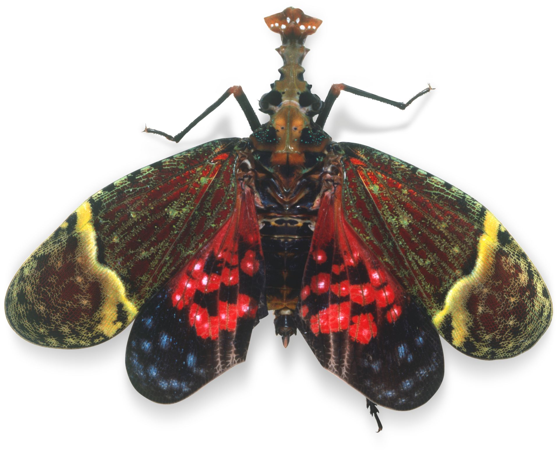 Bug Facts What Are Bugs Dk Find Out