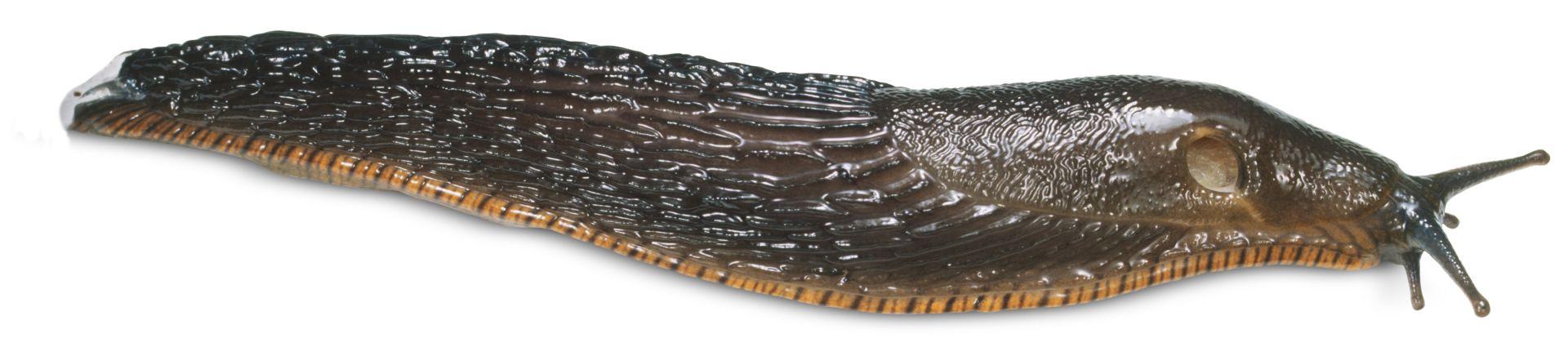 Sea Slug Facts For Kids