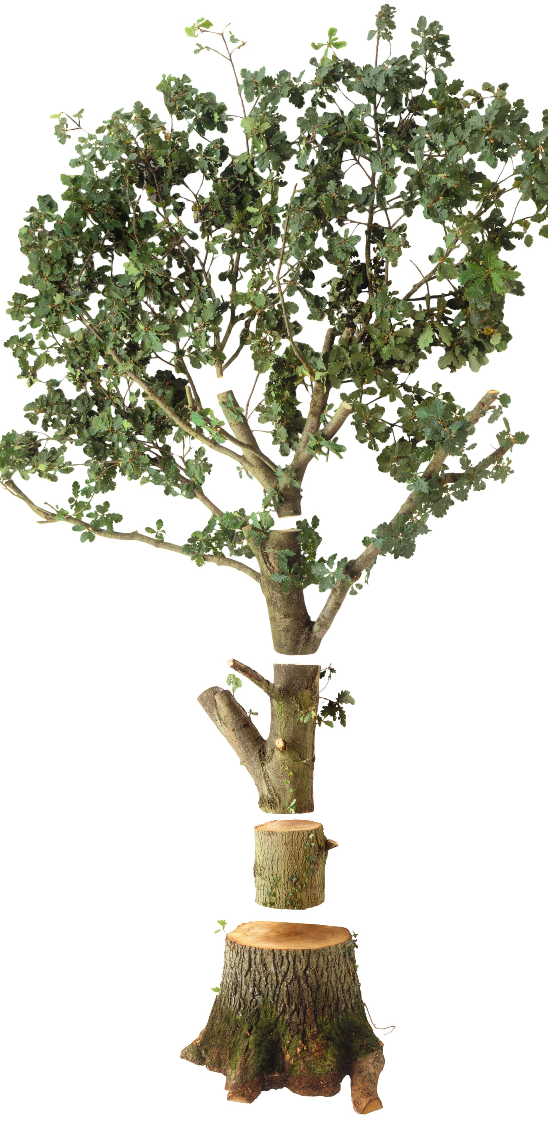 facts about trees for kids tree information dk find out