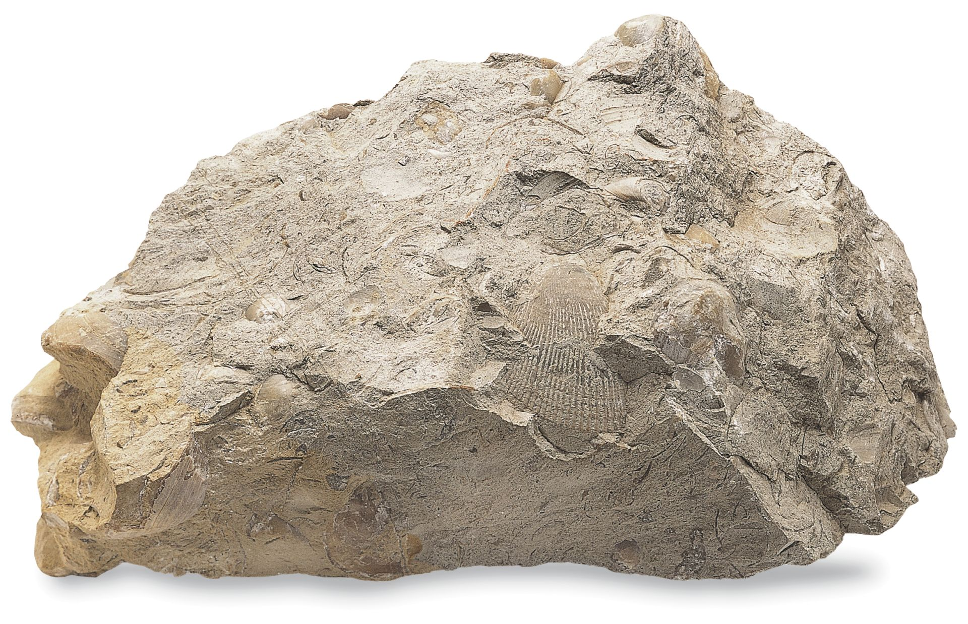 Limestone Sedimentary Rock : Sedimentary rocks types of dk find out