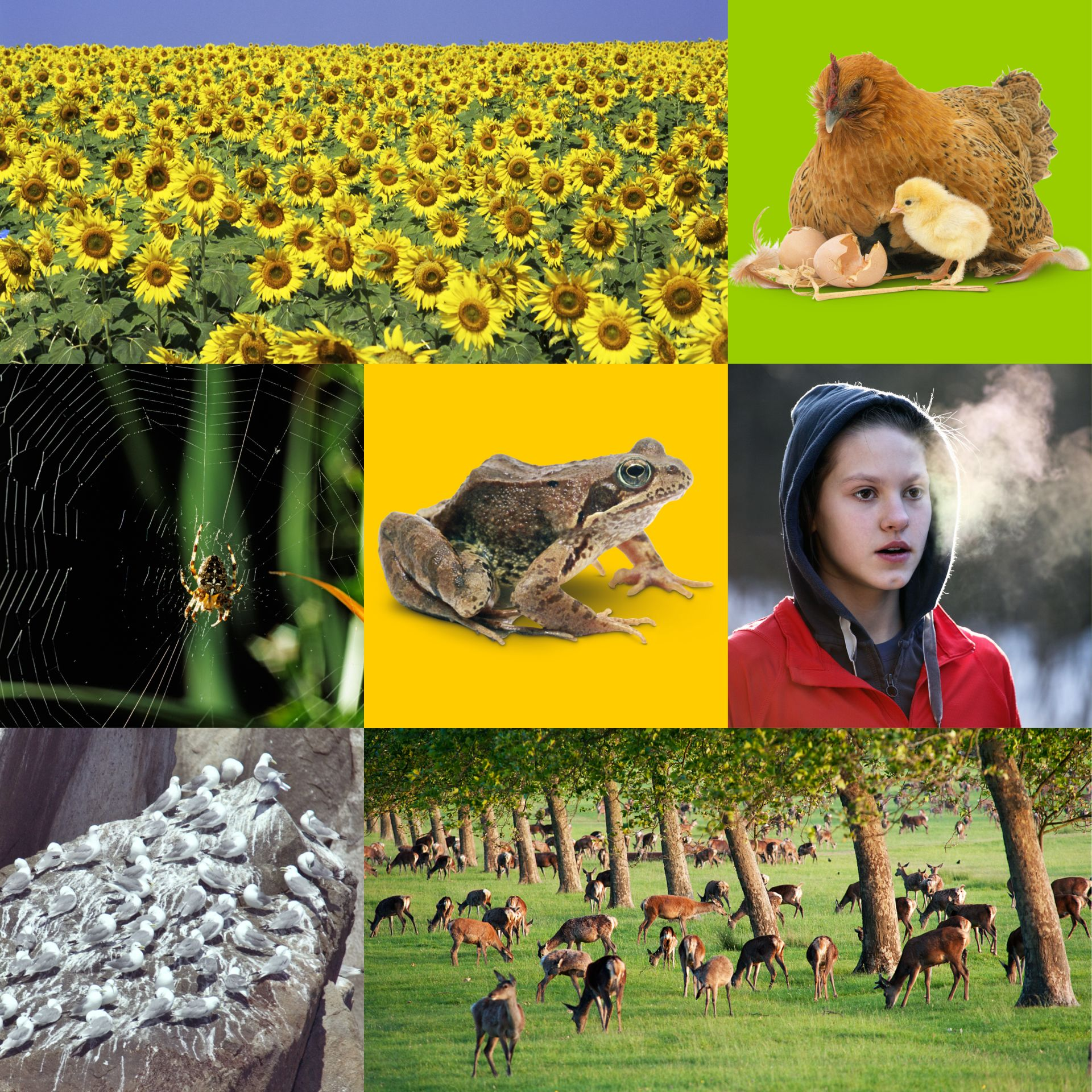 7 Life Processes Of Living Things | Mrs Gren | DK Find Out