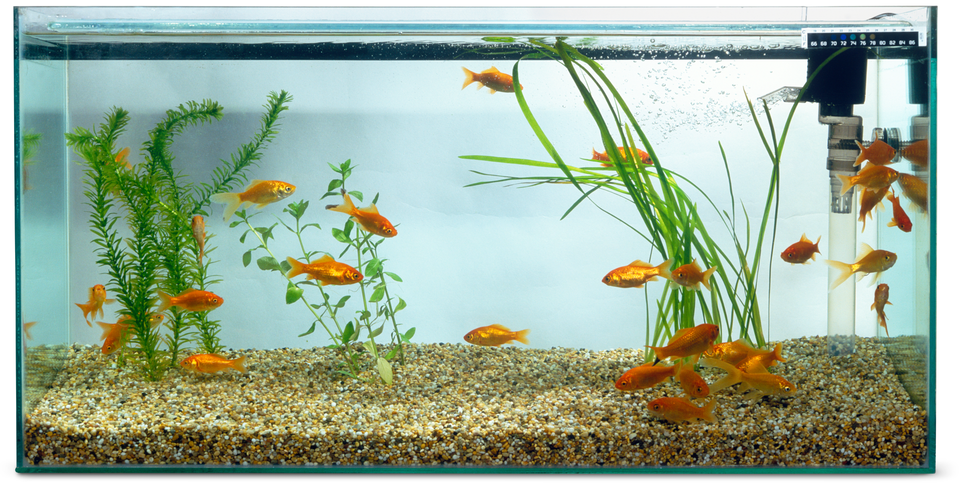 Pet fish facts for kids aquarium fish care dk find out for Fish facts for kids