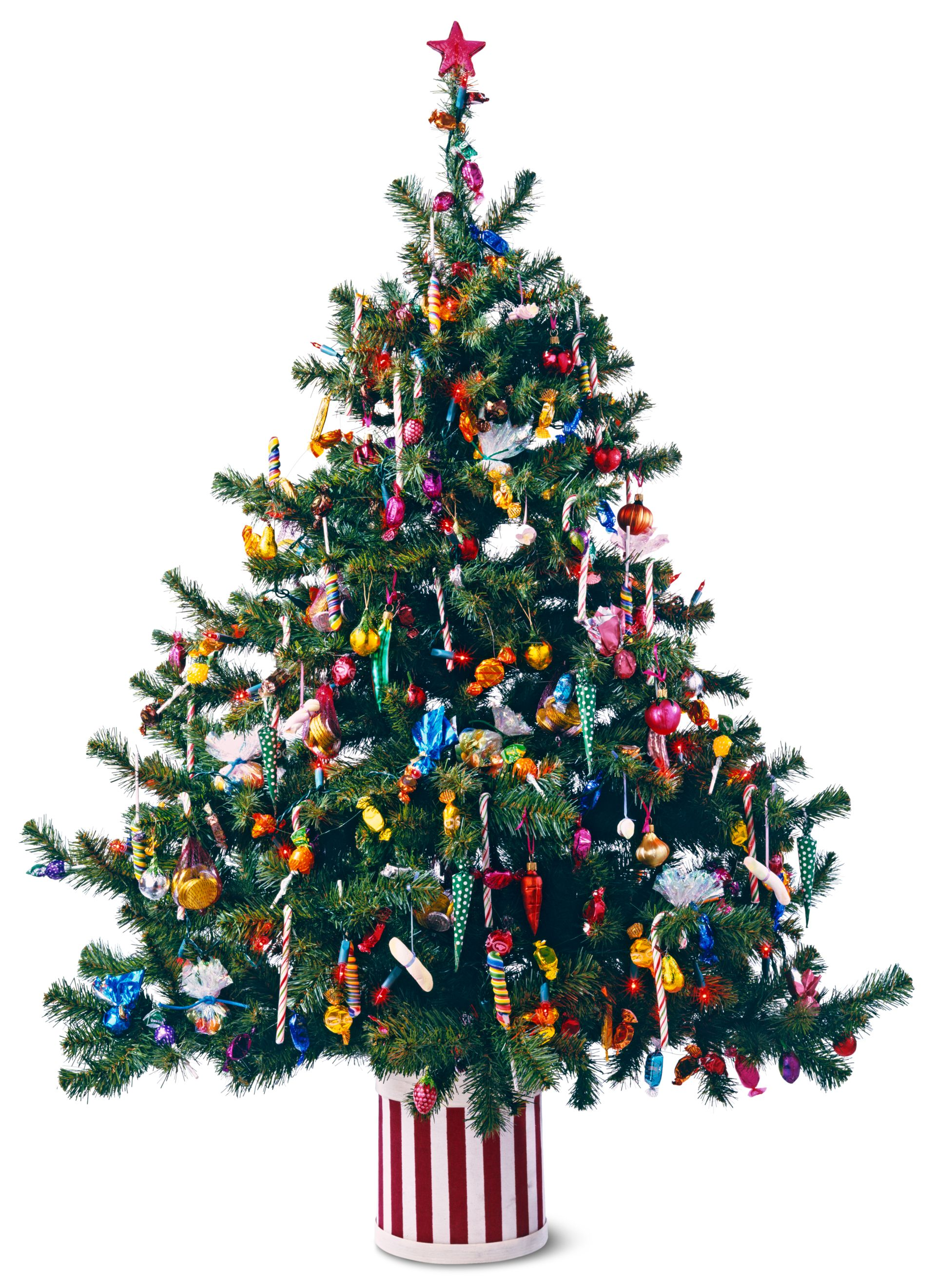 Christmas Facts.Christmas Facts For Kids Christmas Festival Dk Find Out