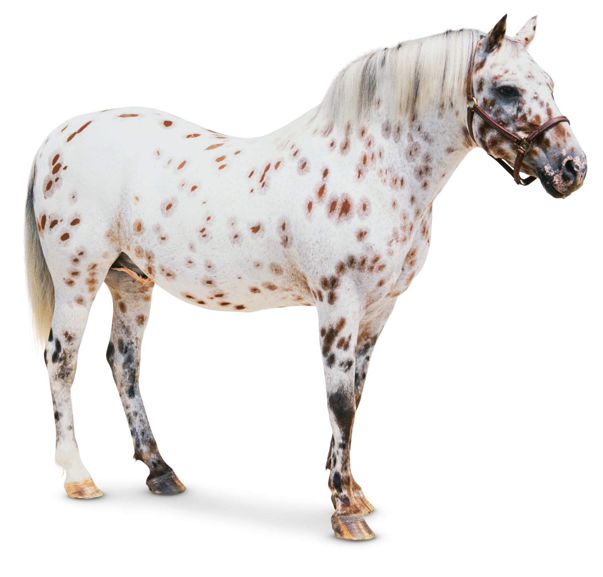 Types Of Horses | Horse Facts For Kids | DK Find Out