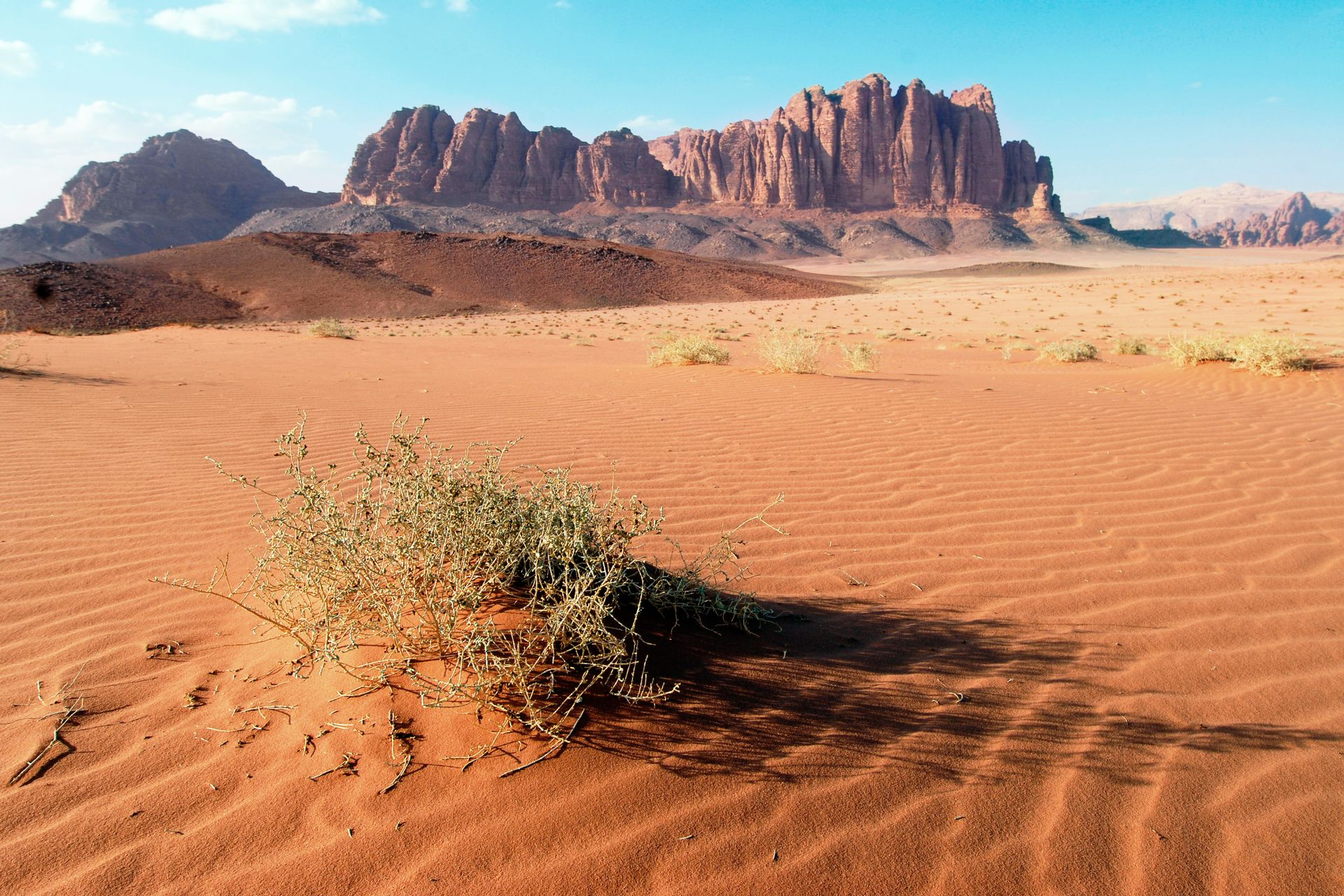 Image result for desert