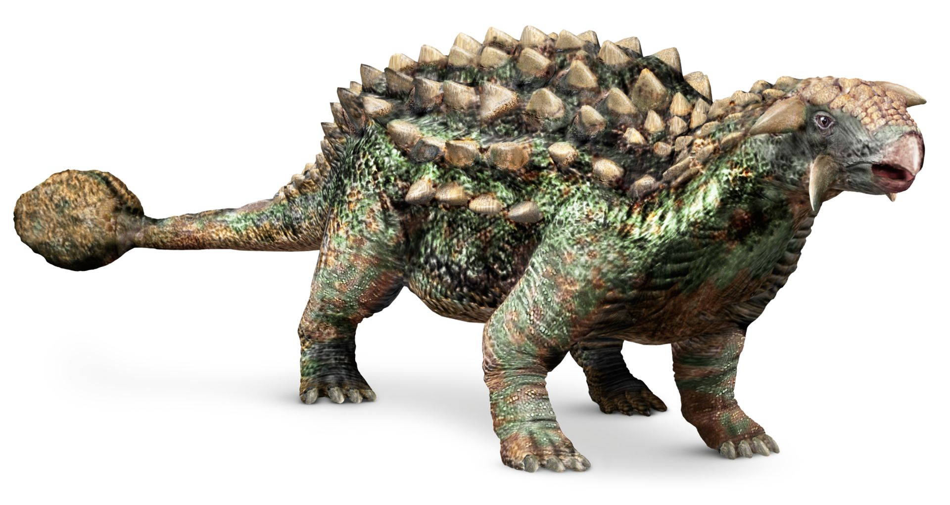 Image result for ankylosaurus