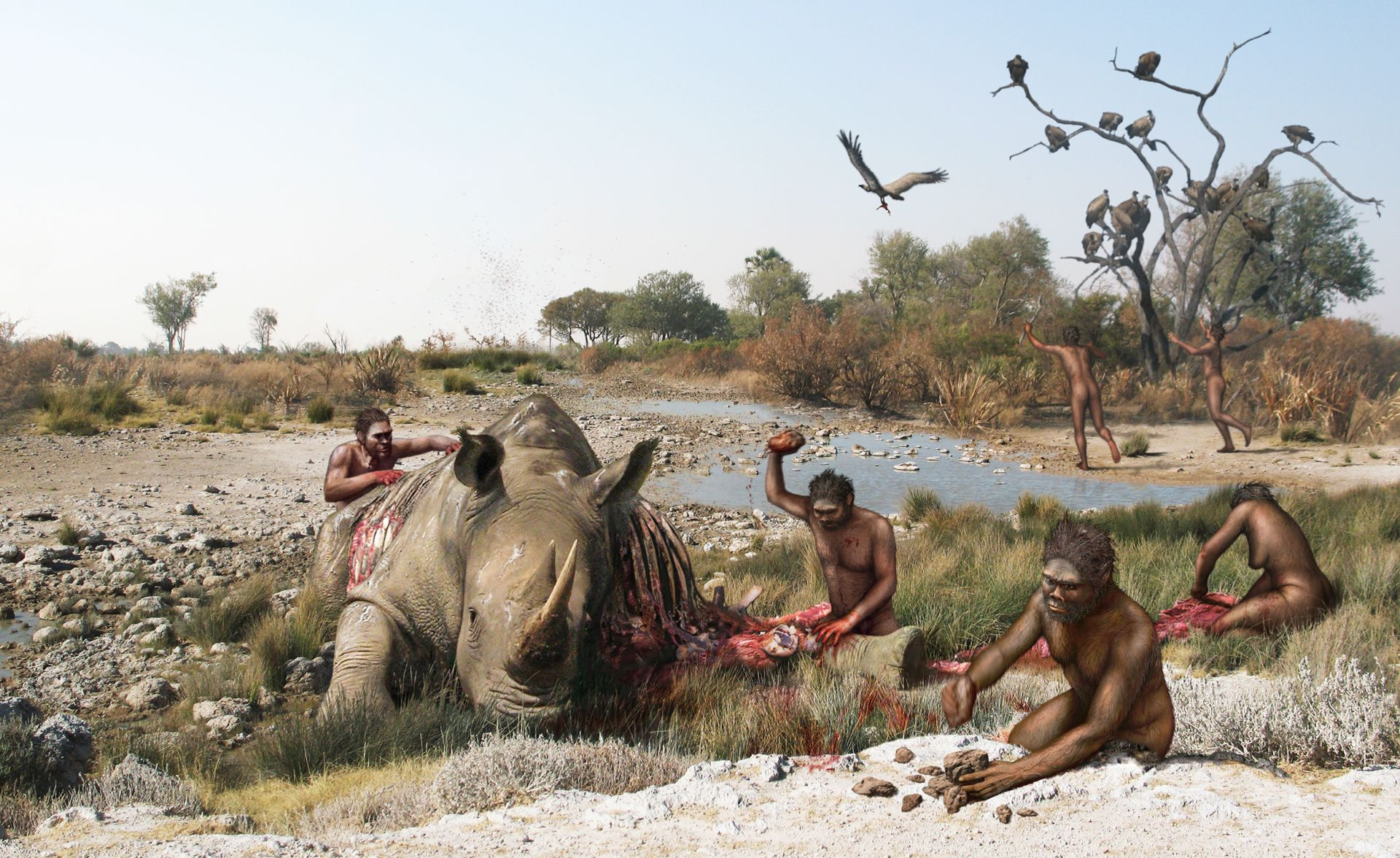 Homo Habilis Tools | Early Humans Tools | DK Find Out