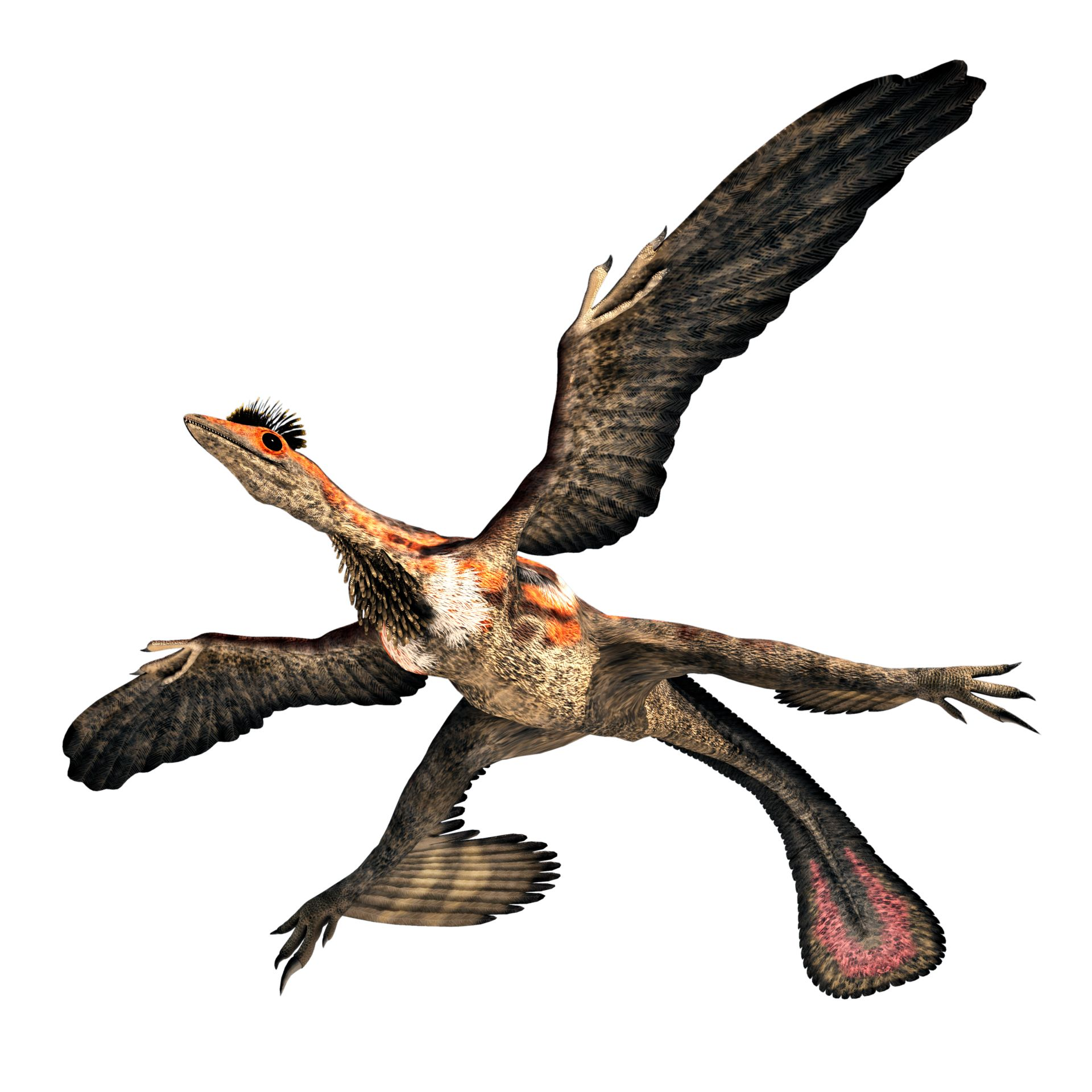 Microraptor Dinosaur For Kids Dk Find Out