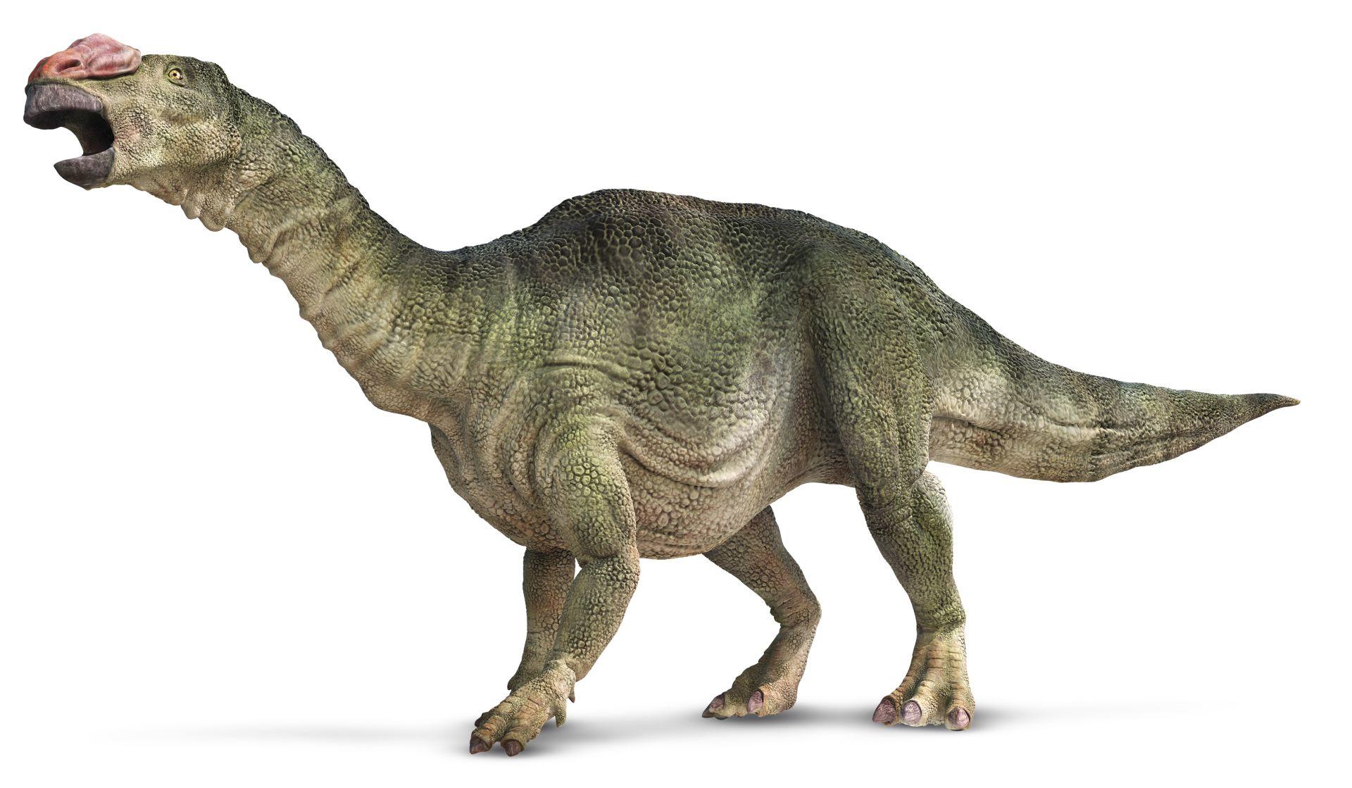 Muttaburrasaurus Dinosaurs In Australia Dk Find Out