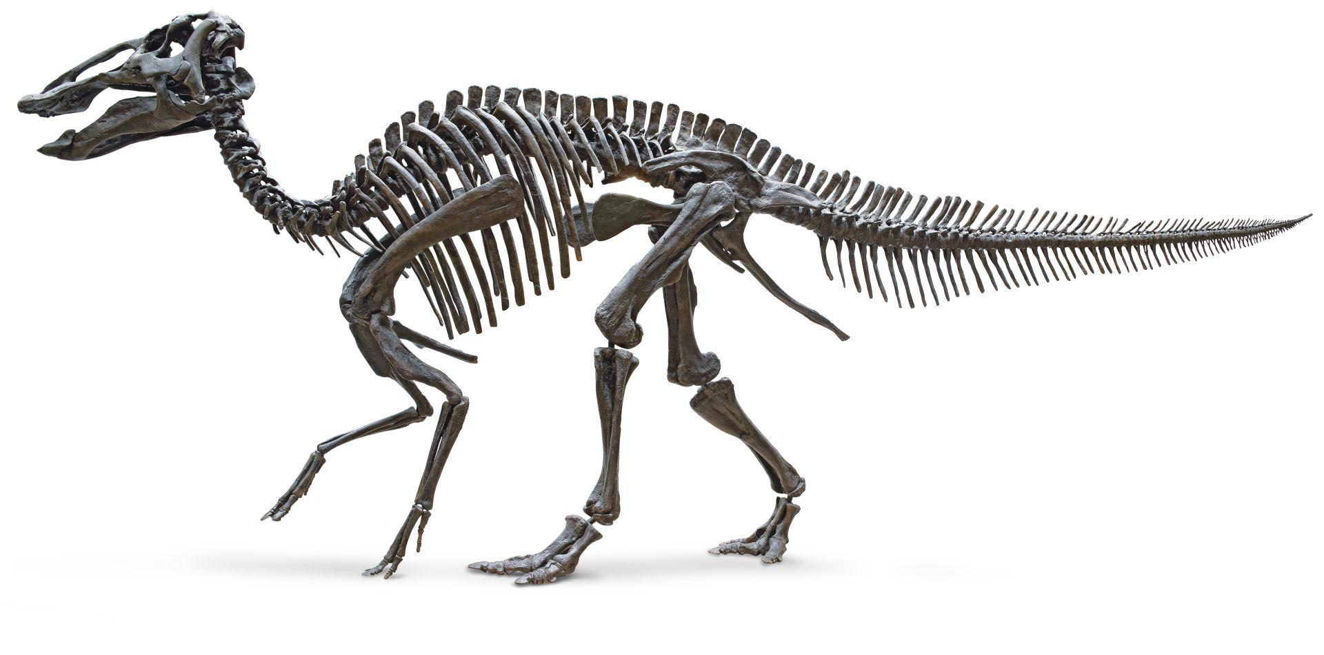Edmontosaurus Size