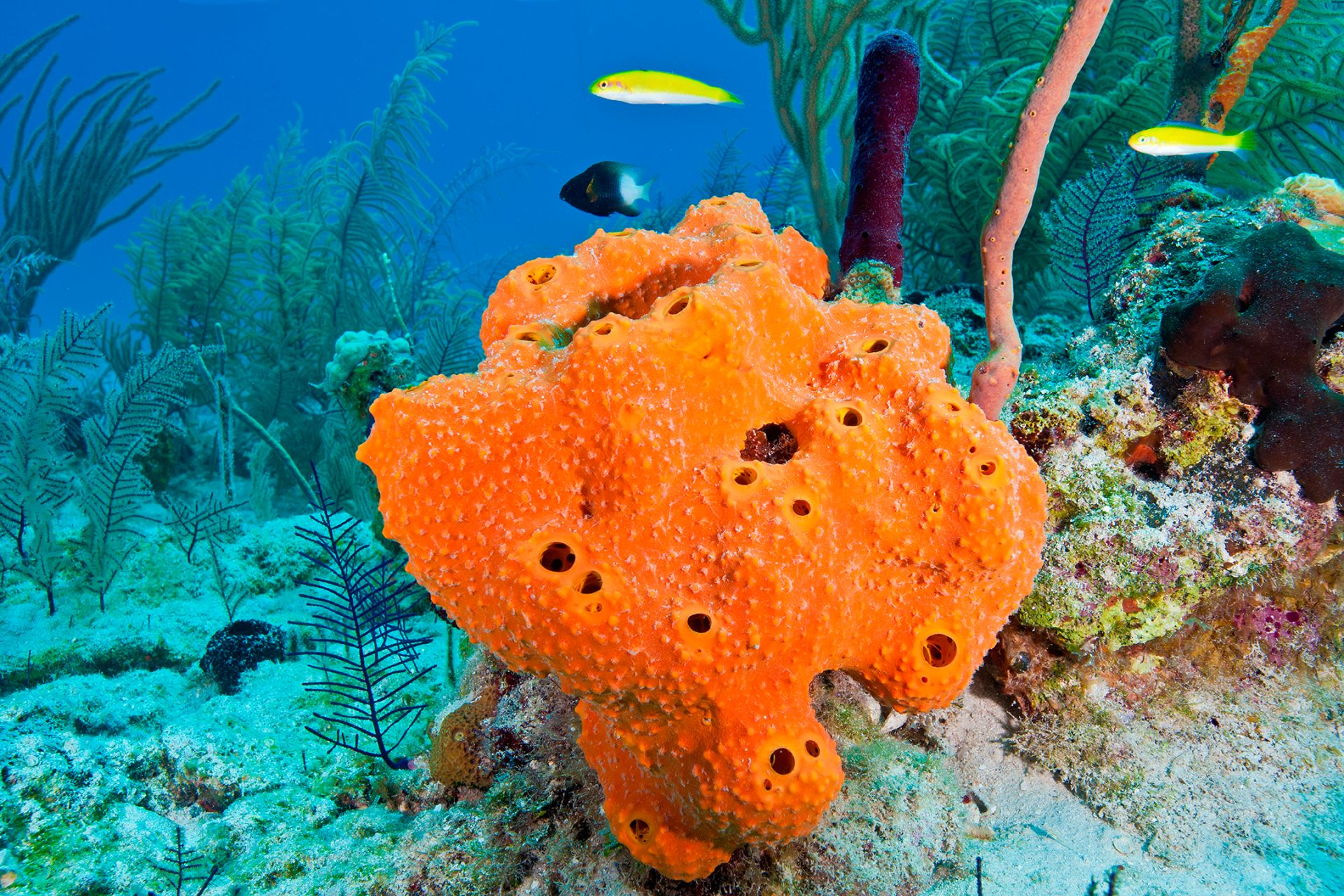 All Around Auto >> Sea Sponge Facts | Types of Sponges | DK Find Out