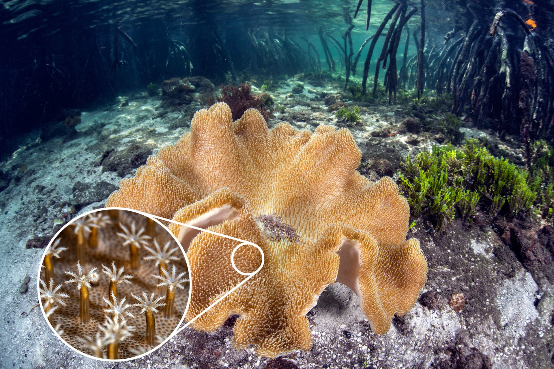 coral reef facts for kids coral polyps dk find out
