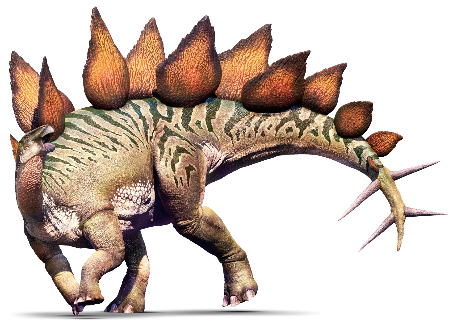 Stegosaurus Stegosaurus Facts Dk Find Out