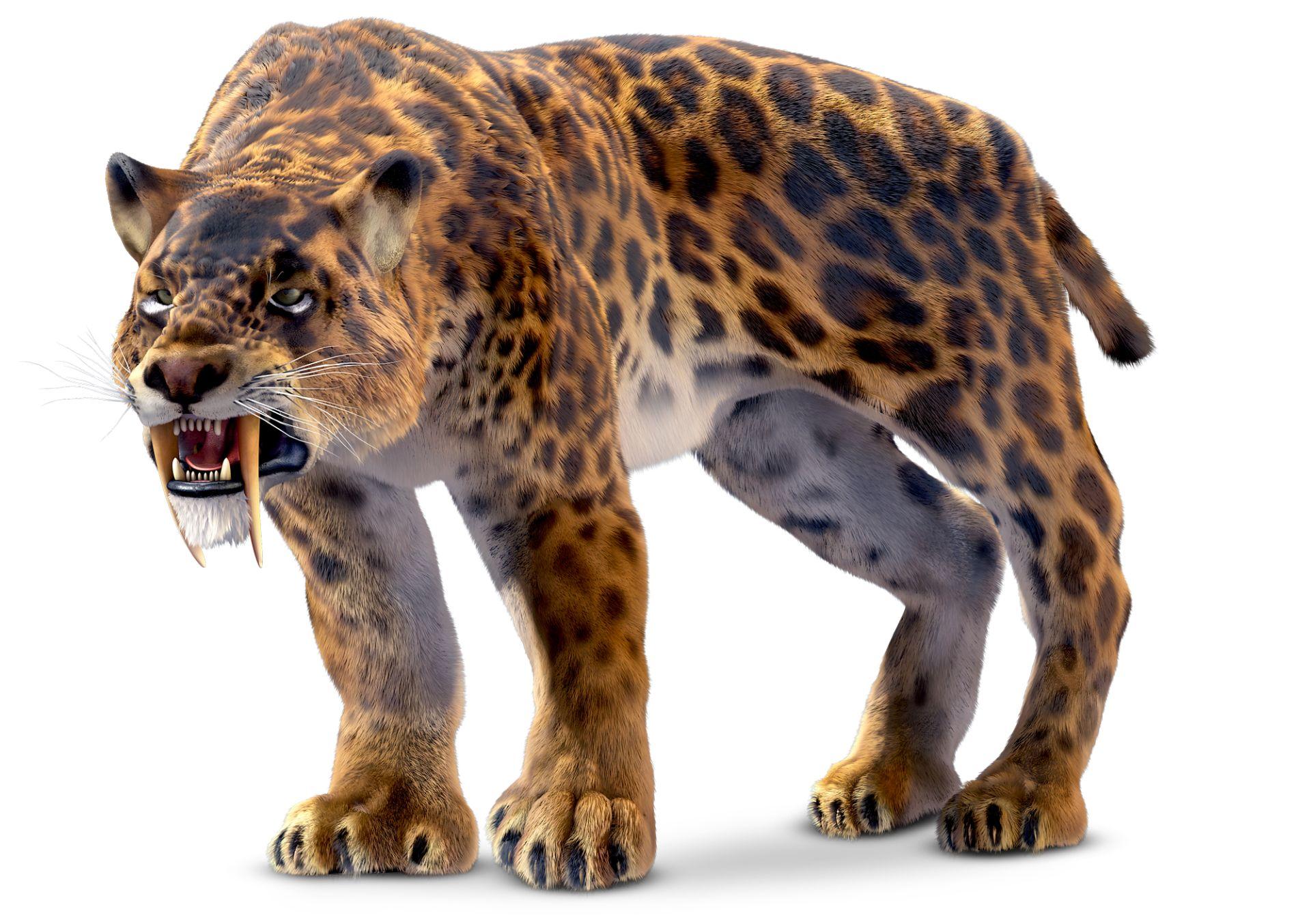 Image result for sabre tooth tiger