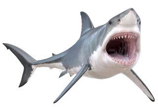 great white shark icon ffif5y