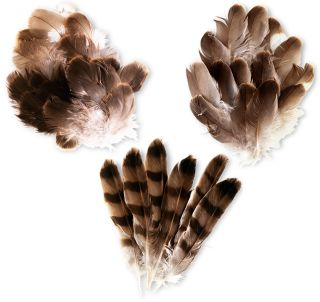 bird feathers types of feathers dk find out