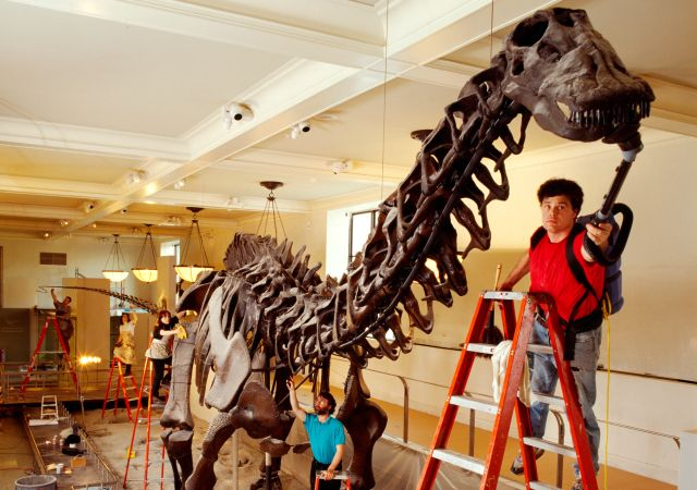 True or false? Take the fossil quiz! quiz | Dinosaurs and