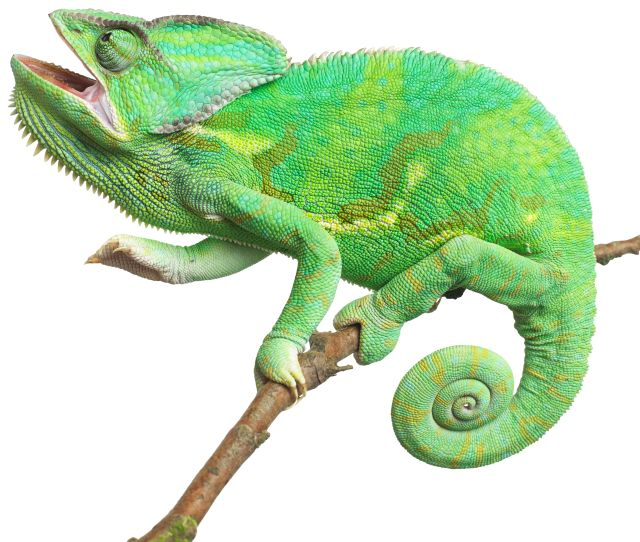Reptiles Quiz For Kids