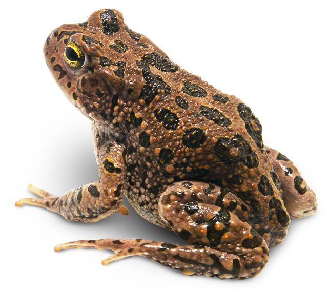 Amphibians Quiz | Amphibians Quiz for Kids | DK Find Out