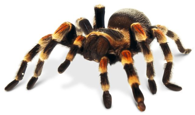 invertebrate animals invertebrates for kids dk find out