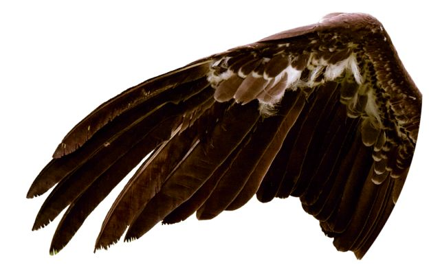 Vulture Birds | Vulture Facts for Kids | DK Find Out