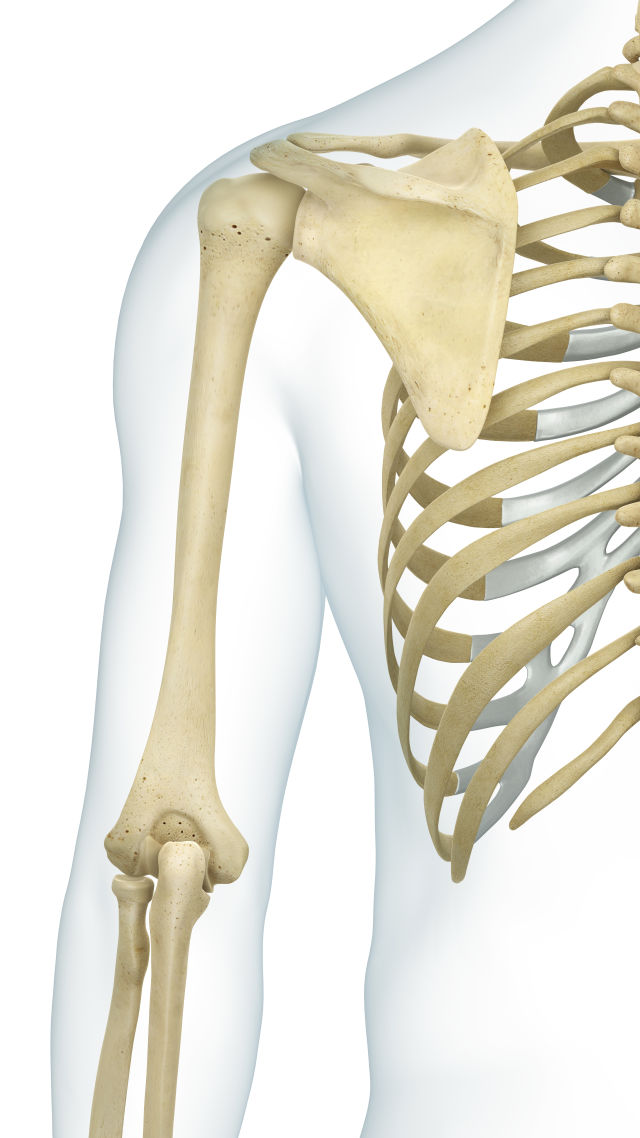 Take The Skeleton And Bone Quiz Quiz Human Body Lessons Dk Find