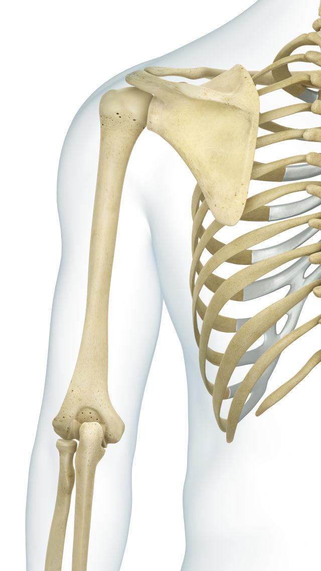 take the skeleton and bone quiz! quiz | human body lessons | dk, Skeleton