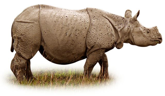 Rhino Facts For Kids | Where Do Rhinos Live | DK Find Out