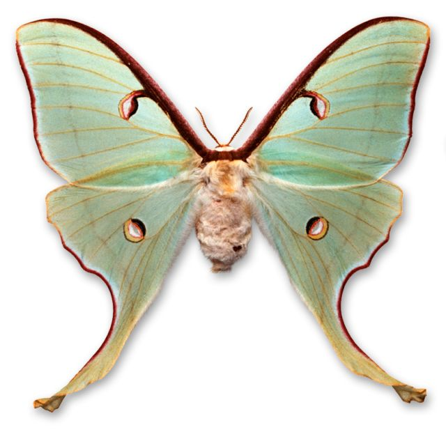 Types Of Butterflies Facts About Moths Dk Find Out